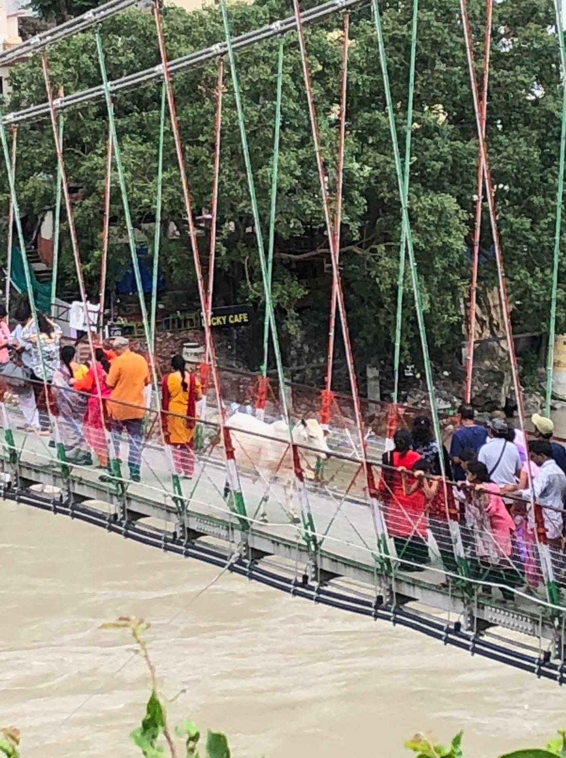 Cow crossing footbridge Rishikesh